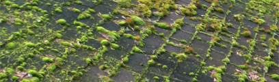 Roof Moss Treatment service for Seattle and Portland